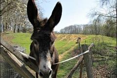 donkeypic