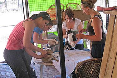 dierenstage Marmaris Turkije