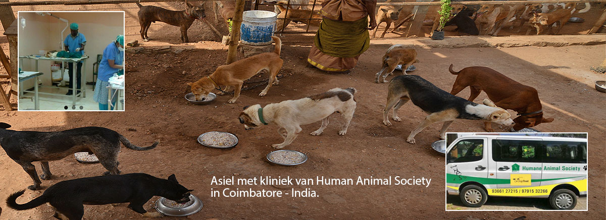 U / D Humane Animal Society | Coimbatore - India - Stage
