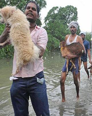 dieren redden van overstroming
