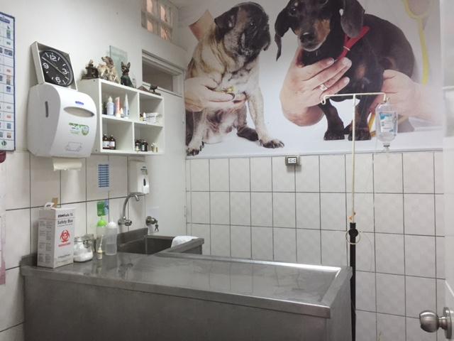 Keurige kliniek waar samengewerkt kan worden met Pepe, de locale dierenarts